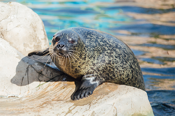 A seal sitting on a rock at a sea life centre