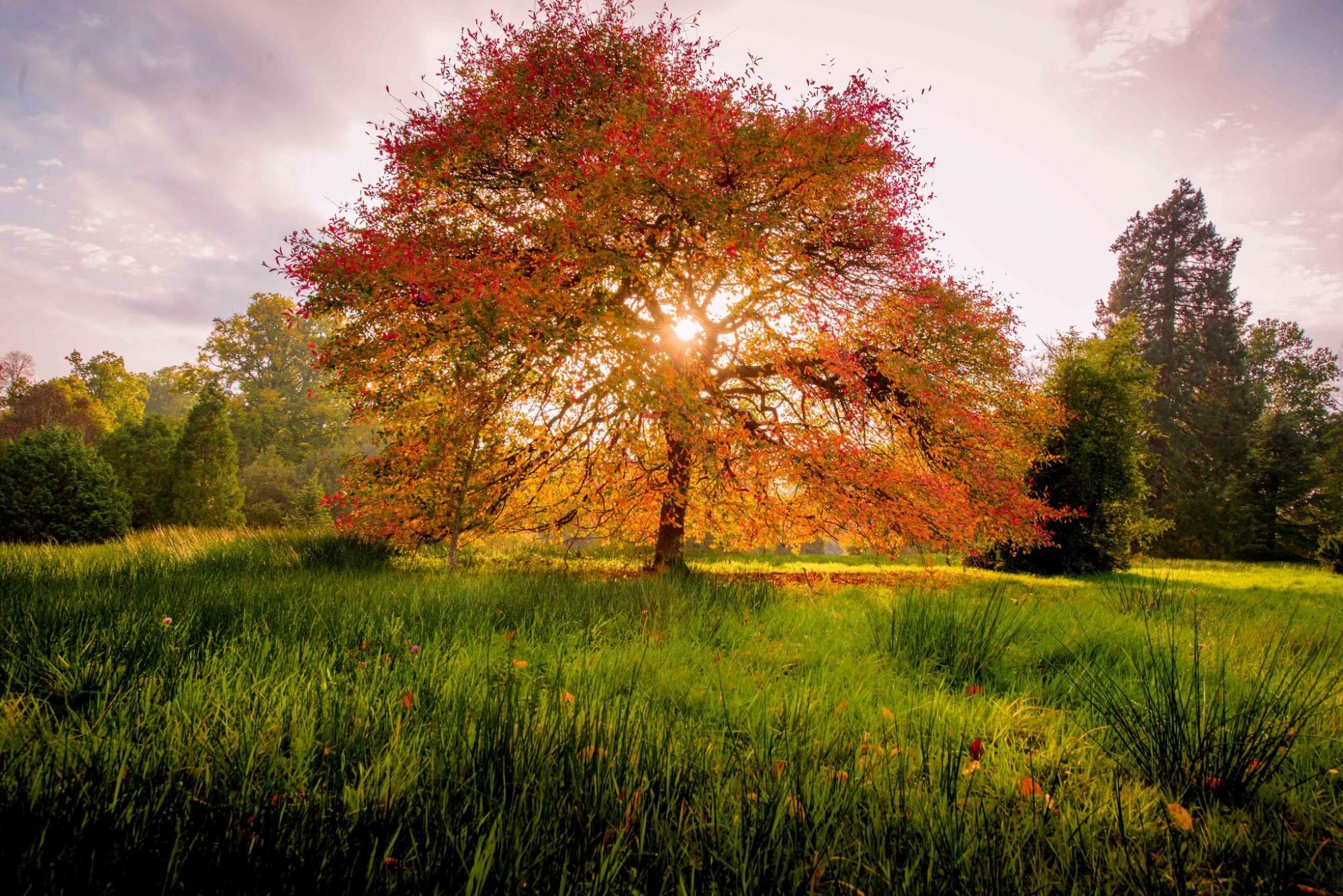 A beautiful tree at wakehurst with orange leaves