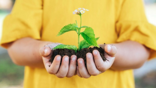 Child holding soil with a flower growing in it