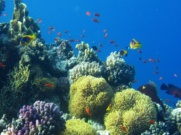 Scuba Diving Trip to Egypt