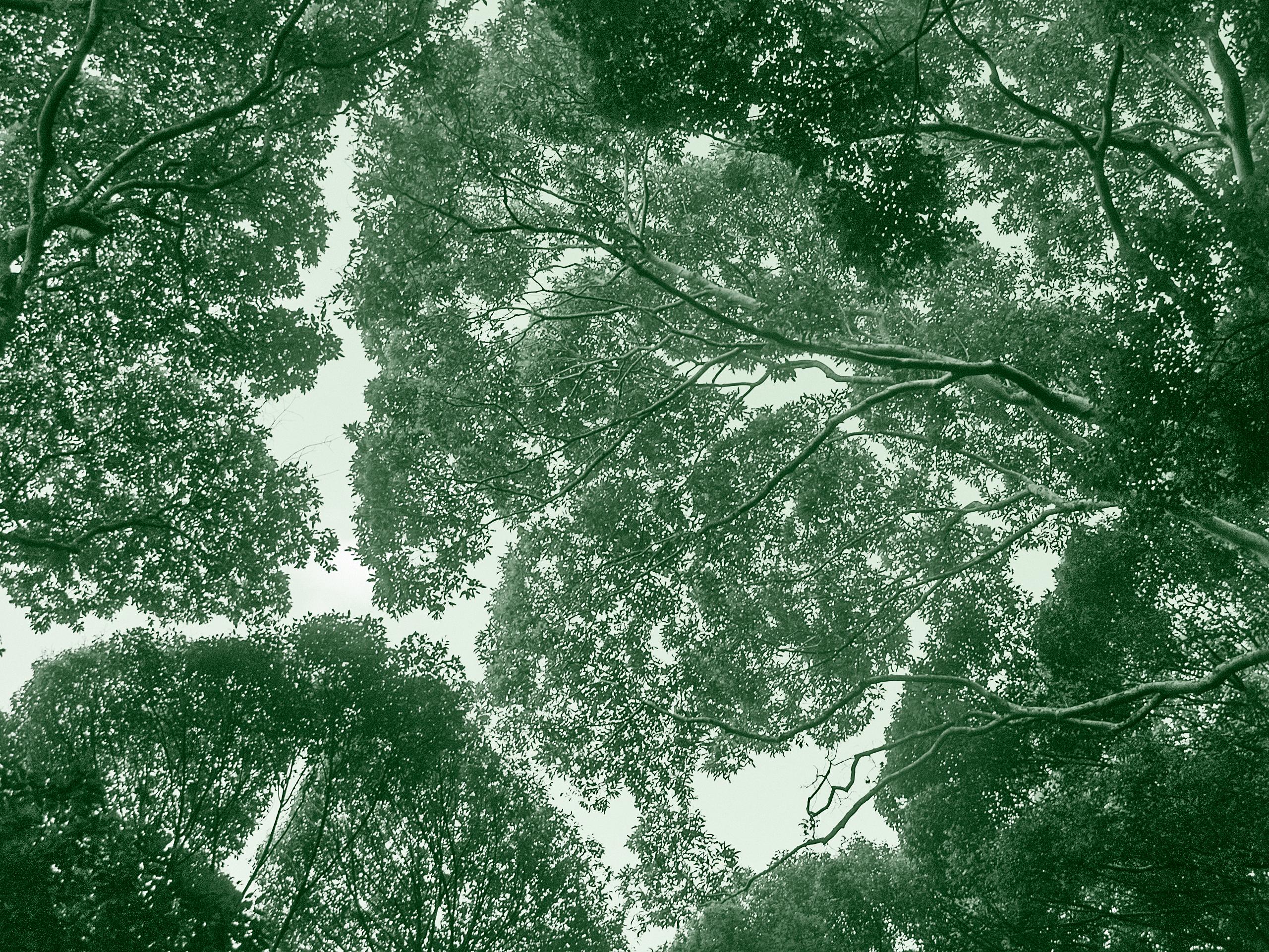 Tropical jungle ecosystem