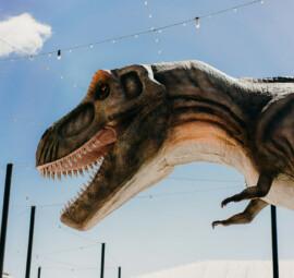 Lakeside Dino Launch56 websize