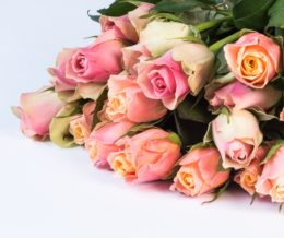 Our guide to Mother's Day in Colchester 22 Feb