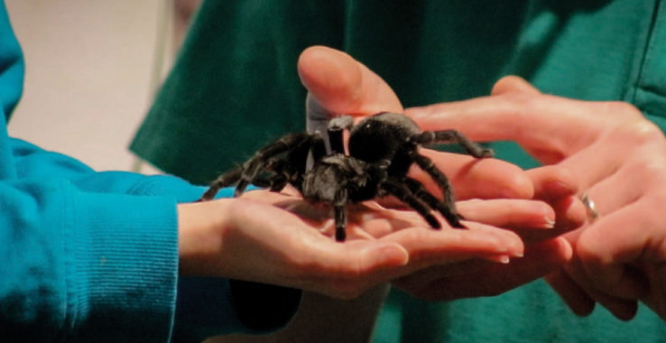 Amazing Animal Encounters at Colchester's Natural History Museum (19th February) Colchester Castle