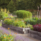 The Kitchen Garden, at...
