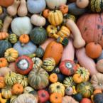 Pumpkin Pretenders at...