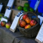 Apple Harvest at Beningbrough...