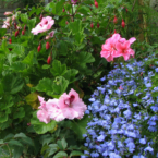 Victorian Gardens of Pateley...