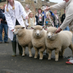 Masham Sheep Fair