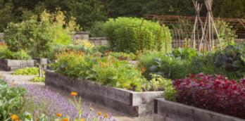 The Kitchen Garden, at Rudding Park