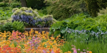 RHS Garden Harlow Carr bursts out of lockdown