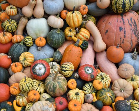 Pumpkin Pretenders at Beningbrough Hall