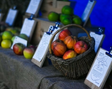 Apple Harvest at Beningbrough Hall