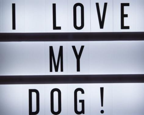 Dog Friendly Day, Commercial Street in Harrogate