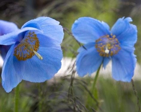 RHS Garden Harlow Carr Flower Show