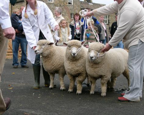 Masham Sheep Fair 2021