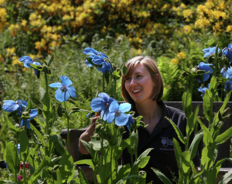 RHS Harlow Carr Summer Garden Show