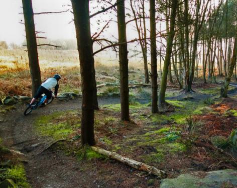 Stainburn Forest MTB Trails & Walks