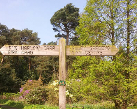 Walk from Valley Gardens to Harlow Carr