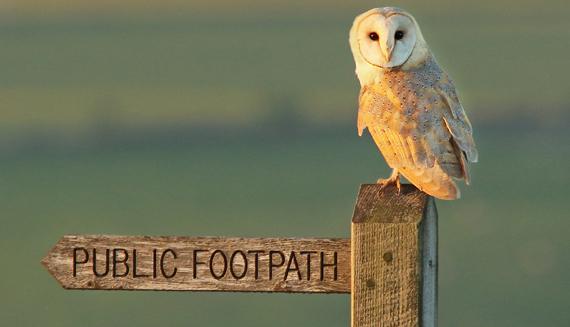 AONB Barn owl