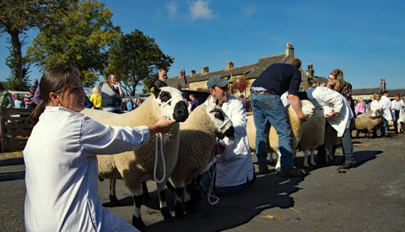 Content Masham Sheep Fair Steve Christian