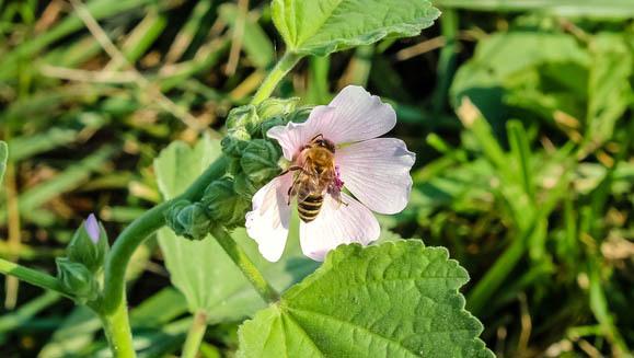 Content wildflower 4436930 1280