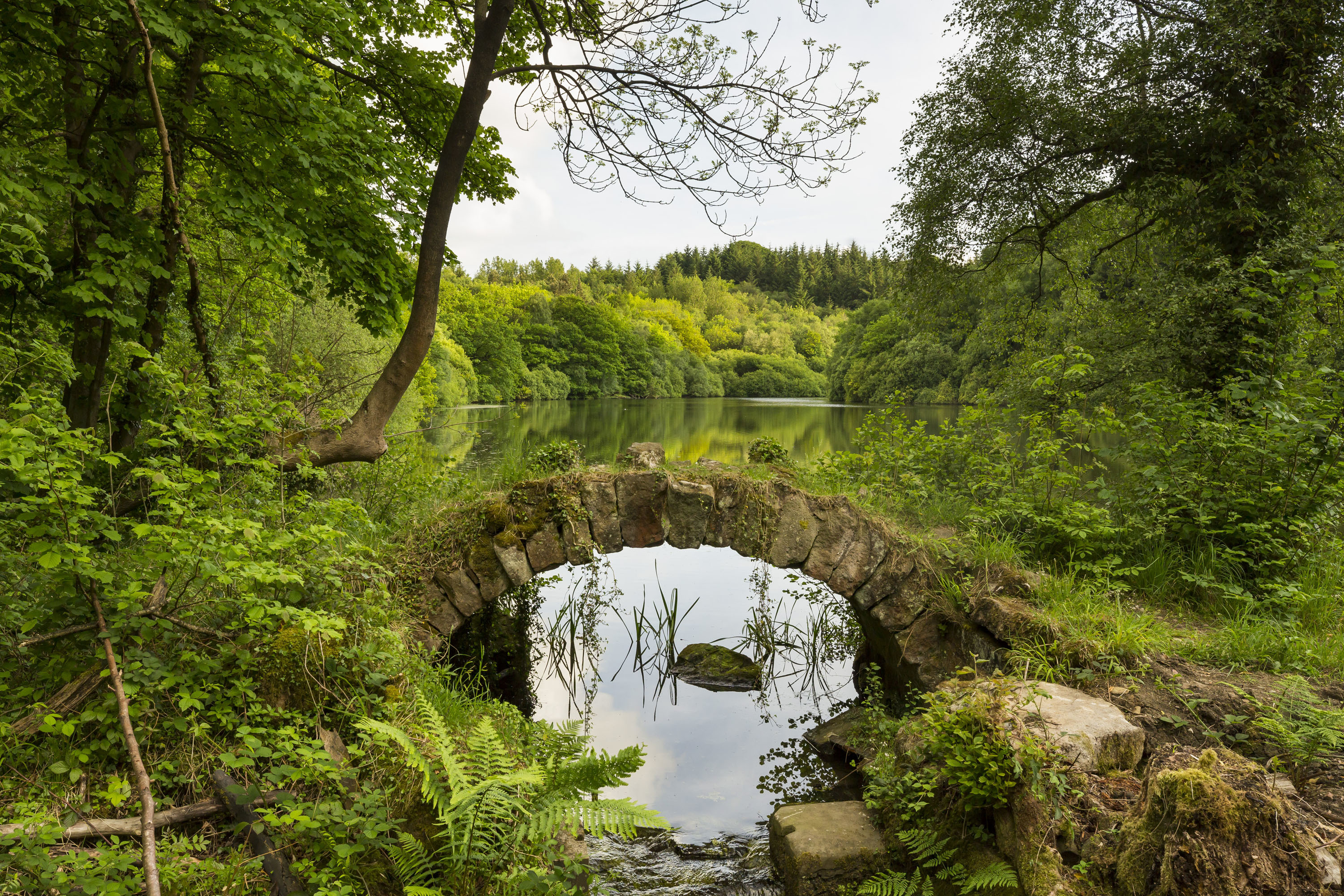 Eavestone Lake from the stone bridge CREDIT National Trust Images Chris Lacey