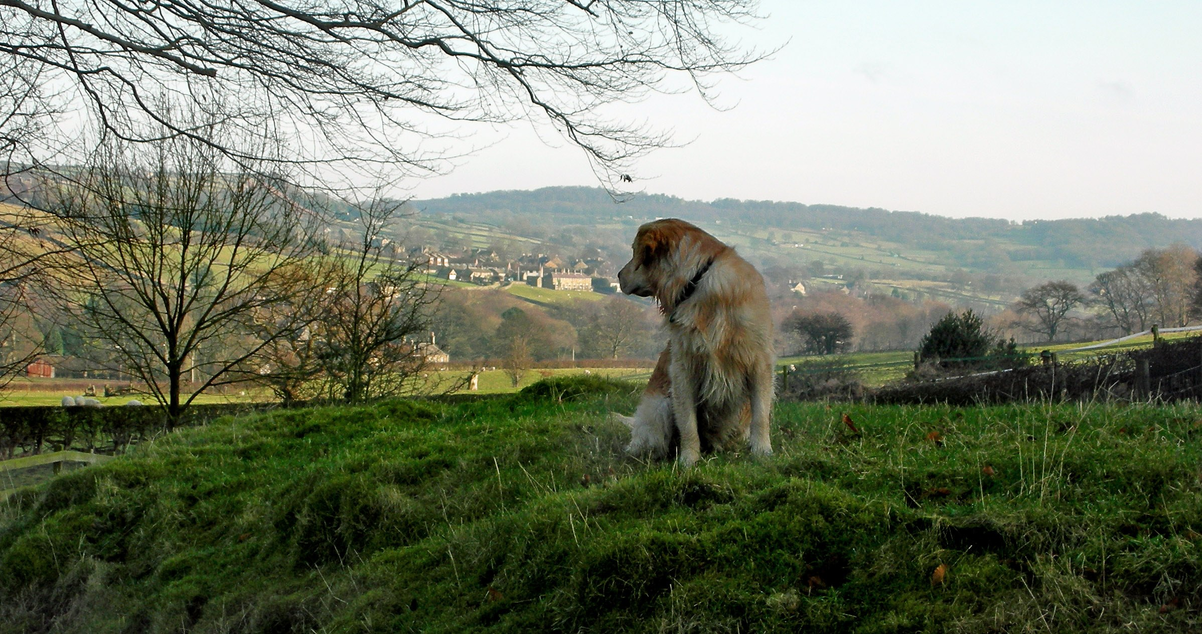 HARR Gallery Dog F Angus Looking Back