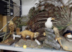Virtual Tours & Online Exhibitions: Explore NewcastleGateshead in Lockdown