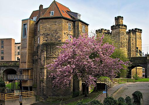 Newcastle Castle Secondary outside blossom