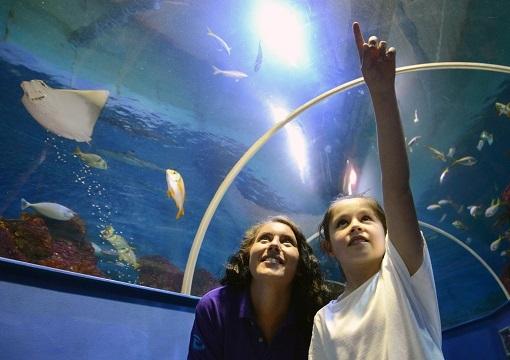 Tynemouth Aquarium SECONDARY1 RESIZEDDC