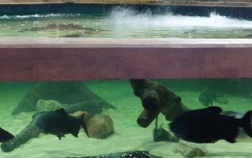 Tynemouth Aquarium