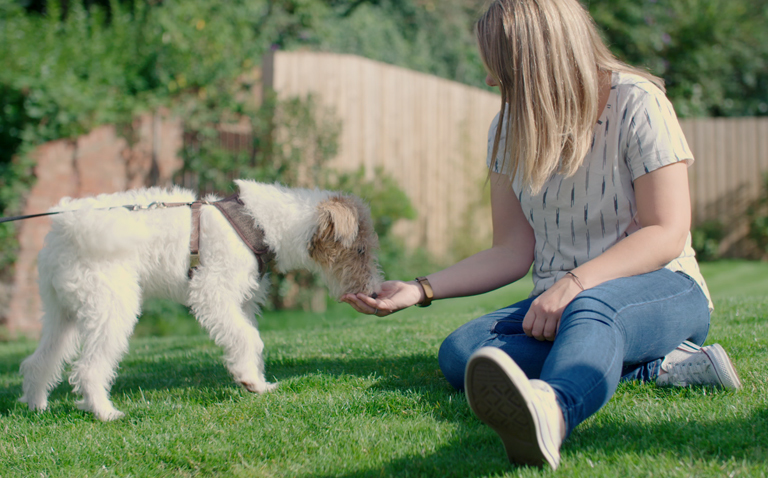 Dog Friendly parks secondary