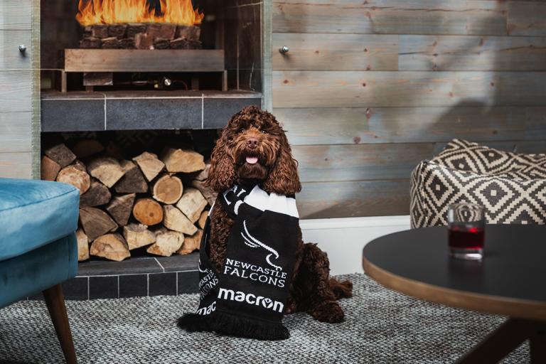 Dog friendly Staybridge Suites Ted