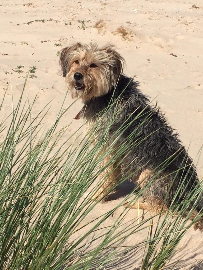 Dora at the beach