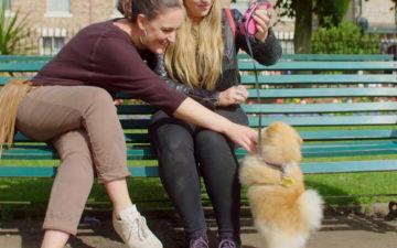 Dog-Friendly Things to Do in NewcastleGateshead