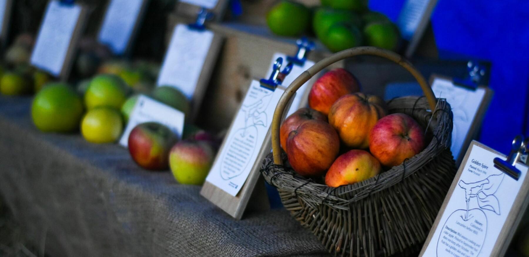 Beningbrough apple display compressed c NT Sue Jordan