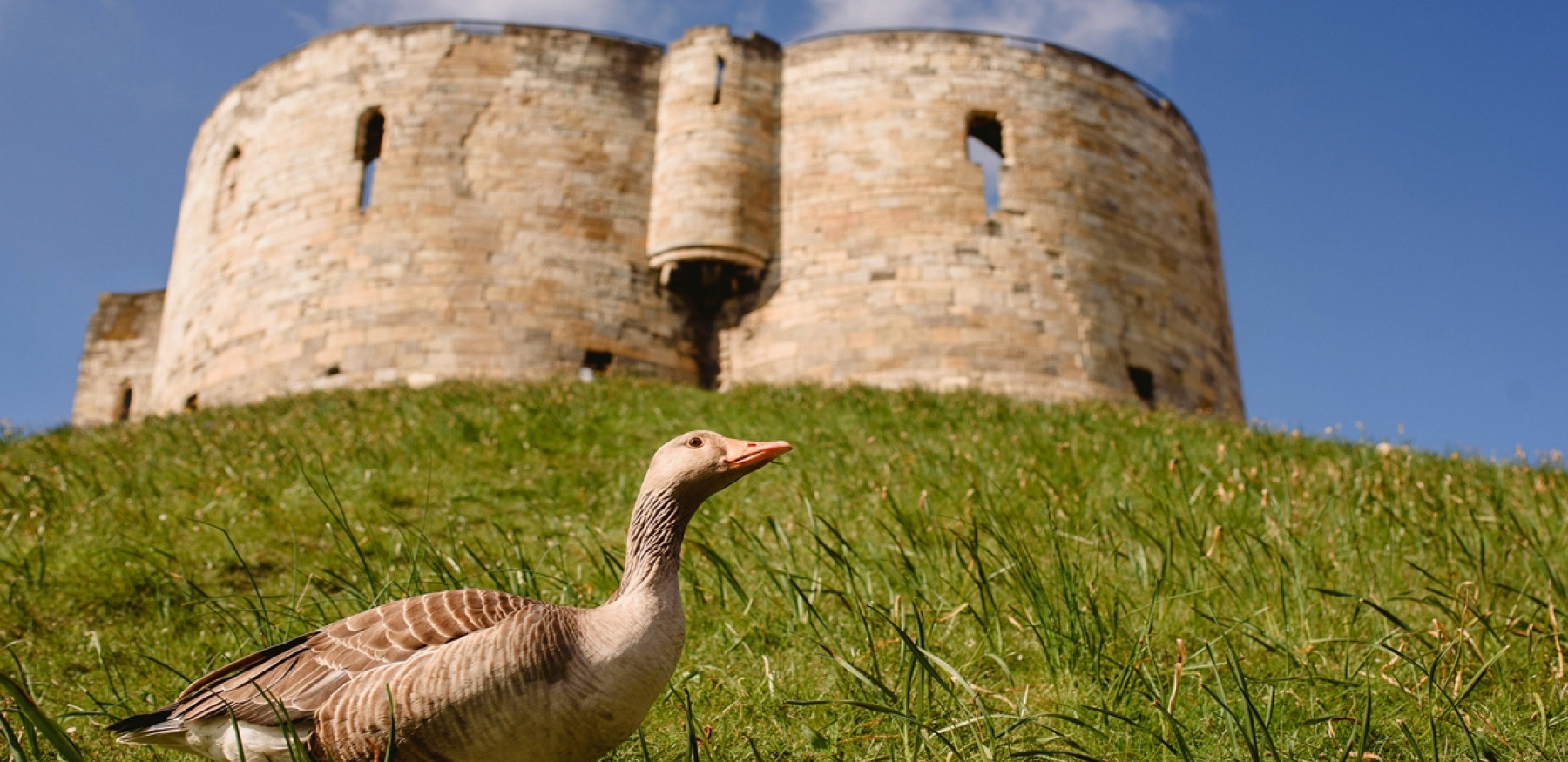 Experience Cliffords Tower with Exploring York 627037777