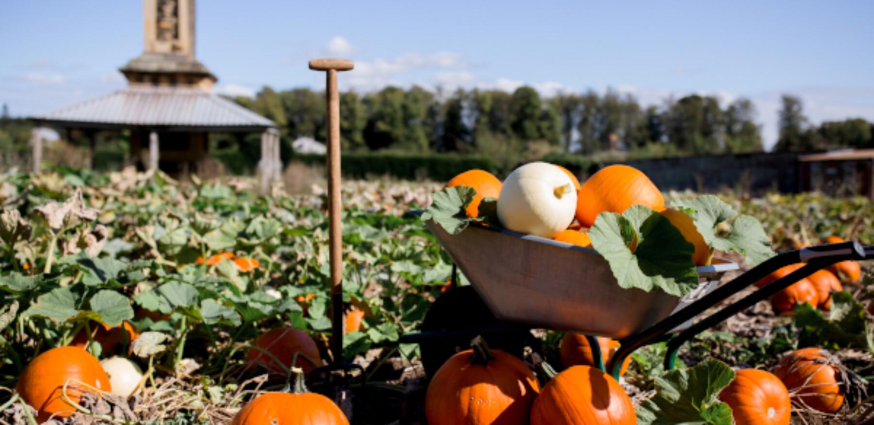 Pumpkin Patch21