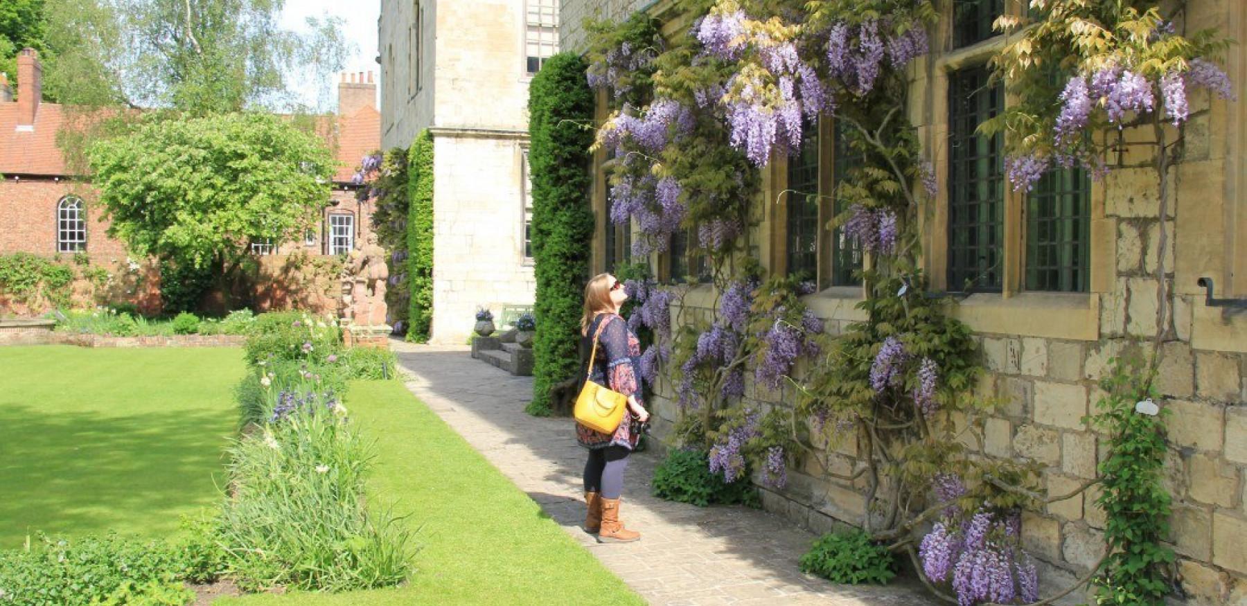 Blog Conversant Traveller Admiring the wisteria at Treasurers House in York