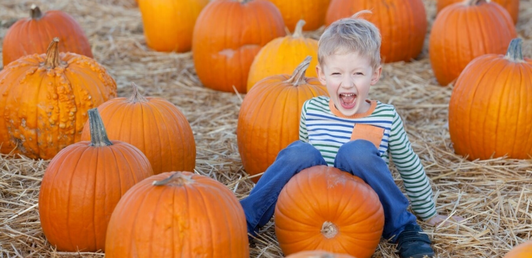 Shutterstock 158056544 1
