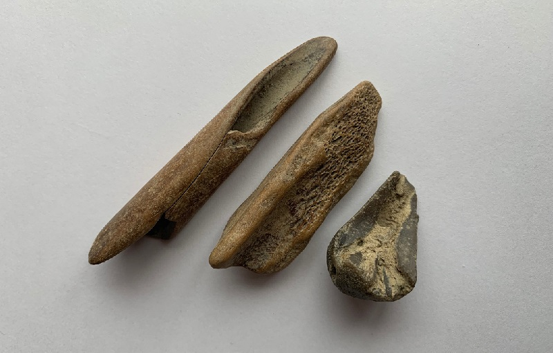 Animal bones found on the Thames foreshore