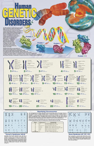 Poster: Human Genetic Disorders (Laminated)