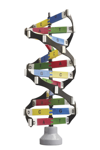 DNA Activity Model - Edulab