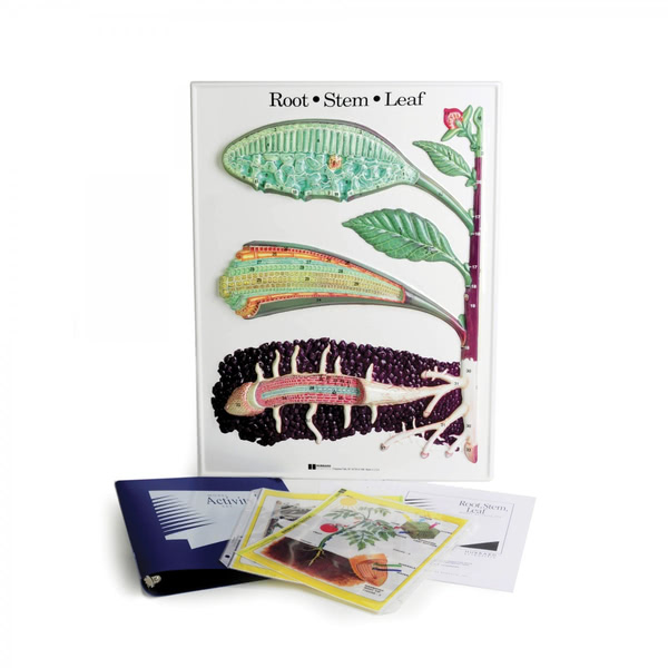 Root Stem & Leaf Model Activity Set
