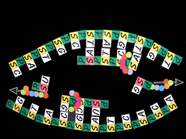 Magnetic Teaching Aid - DNA/RNA Protein