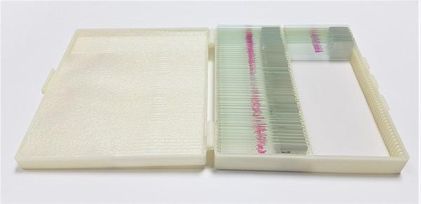 Prepared Microscope Slide Set - Digestion (Stomach