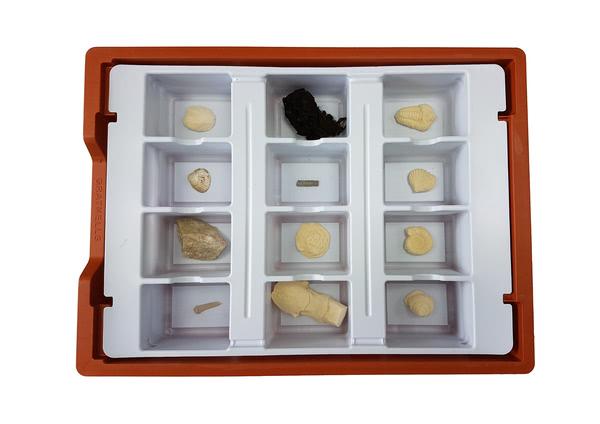 Basic Fossil Set . 12 Samples