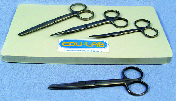 Scissors, Dissecting 145mm s/s - blunt ends, closed shank