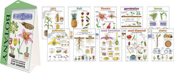 Flipchart  - Botany
